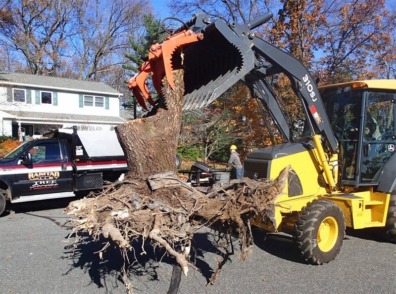 Stump Removal | Raritan Valley Tree Service | Middlesex County NJ