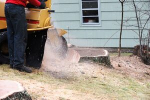 services_stump-grinding2